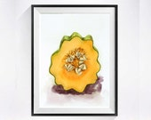 1. Vegetable Kitchen Botanical Art PRINT / Still life watercolor painting / Acorn squash drawing artwork / Wall décor orange color field
