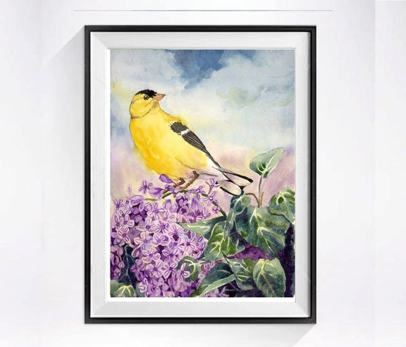 Bird Art - PRINT of a Watercolor Painting - American Goldfinch wildlife nature animal art nature art - 8 x 10