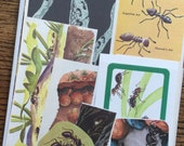 Ant Farm Vintage Nature and Science Collage, Scrapbook and Planner Kit Number 1955