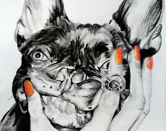 """11x14"""" Original Drawing of a Boston Terrier in graphite and charcoal"""