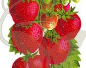 Fruit Strawberry Digital Vintage Illustration Printable Clip Art Image Download Botanical