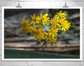 Arizona Wildflowers, Nature Photography, Floral Art, Flower Print, Flower Photography, Earth Tones, Fine Art Print, Flower Picture, Wall Art