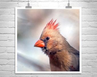 Cardinal Bird, Bird Art, Nature Photography, Wildlife Art, Square Print, MurrayBolesta, Madera Canyon, Red Cardinal, Bird Print, Tucson
