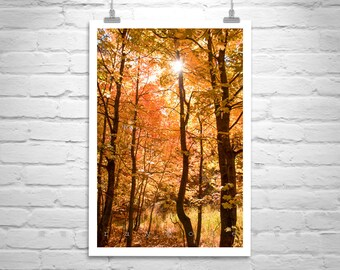 Autumn Leaves, Forest Art, Fall Photography, Tucson, Catalina Mountains, Vertical Wall Art, Autumn Photo, Tree Print, Nature Photography