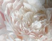Peony  Print, Flower Stock Photo, Printable Peony Clip Art,  Flower Photography, Digital Download, Royalty Free Flower Art