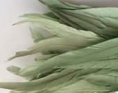 BELLISSIMA  Tail Feathers / Sage Green /  195