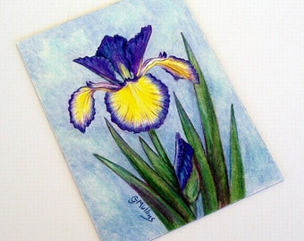 Adriatic Blue Spuria Iris Art Original 5 x 7 Colored Pencil Art Unframed by AllKindsofArt