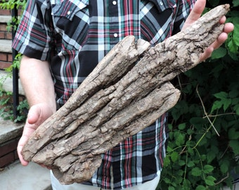 24 inches Large bark Natural Driftwood Log of Atlantic Ocean / for base, wall decor or any project /  U11