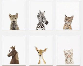Baby Animal Nursery Art Print: Baby Zebra Little Darling.