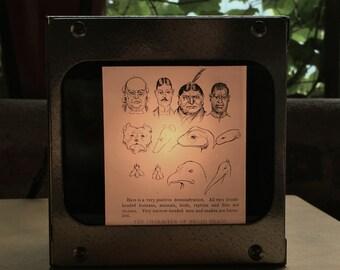 COMPARATIVE ANATOMY SKULLS - Vintage magic lantern glass slide light box