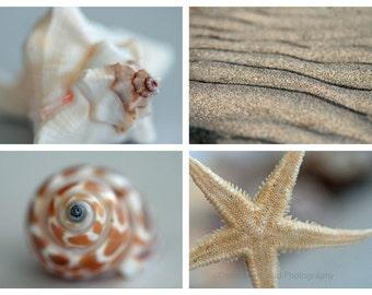 Sand and Shells Photo Set