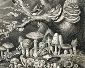 Antique Print of Mushroom Plants and Fungi - 1870 Vintage Print - Plate 4 - Home Decor