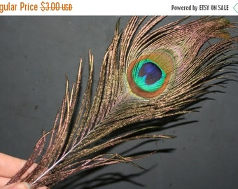 INVENTORY CLEAROUT Original Peacock Feather - approx 10 inches long - 3 pcs