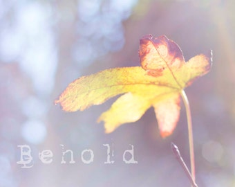 Behold fine art print, autumn leaf photo, single leaf print, fall leaf photography nature lover print nature inspired decor cabin furnishing
