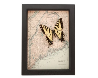 Framed Map of Maine with native Tiger Swallowtail