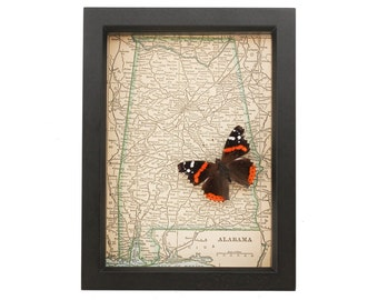 Framed Map of Alabama with Native real butterfly display