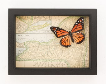 Framed Old Map of New York State Mounted Butterfly