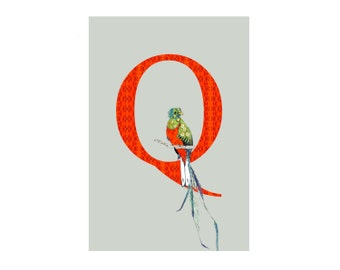 MATTED Q is for Quetzal - Alphabet - Art Print - Nursery Art - Alphabet Animals