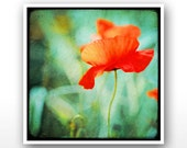 "Deluxe Signed 8""x8"" Print - Coquelicot Dansant"
