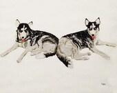 Custom Pet Embroideries