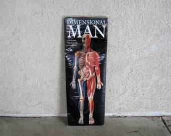 Vintage Dimensional Man, 3D Anatomy Chart. Circa 1980's.