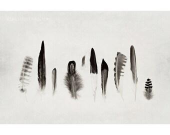 Still Life Photography, 8x12 Print, Nature Photography, Black and White Photography, Feather, Feather Photography, Minimalist Decor, Birds