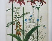 Lilies/Snakes, Sunflowers, Nature Print, Botany Print, 2-Sided Book Page, Albertus Seba, 8.5 x 13.5 in, Unframed Colorplate