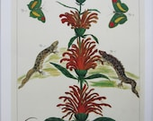 Plants, Snake, Butterfly, Serpent/Seaside Plantlife, Nature Print, Botany Print, 2-Sided Book Page, Albertus Seba, 8.5 x 13.5 in, Colorplate