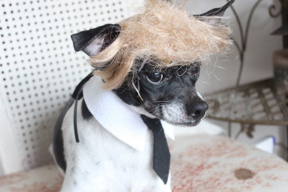 Donald Trump Pet   wig  for dog or cat