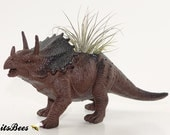 DINOSAUR SALE! Triceratops Dinosaur Planter Pot - Room Decor, Desktop, Table, Dorm - Your Choice: Air Plant, Succulent, Haworthia or Cactus