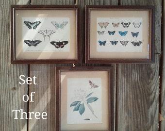 Vintage Butterfly Moth Botanical Framed Prints Set of Three