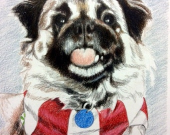 custom pet portrait colored pencil 8x10 original