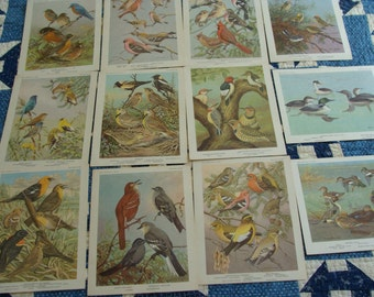 12  Vintage Bird Cards .... Great to work with ... Lot 1