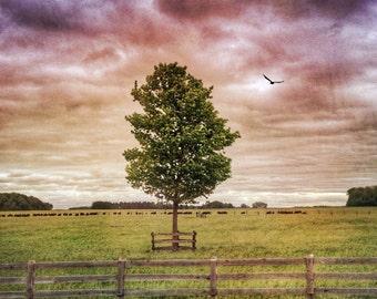 Nature photograph, rural photograph,country photo, landscape, countryside, farm, bird, textured, purple, autumn, sky, Ontario