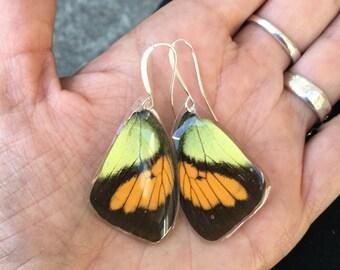 Small Butterfly Wing Earrings, Real Butterfly earrings, Orange Yellow Black insect jewelry, Moth, Cruelty Free, BW019