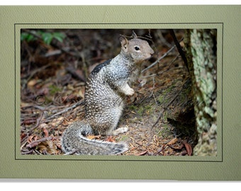 Gray Squirrel Card Blank Inside - Squirrel Cards - Squirrel Birthday Cards - Squirrel Note Cards - Custom Cards Choose Your Cardstock Color