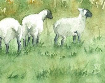 Original Watercolor of Black Faced Sheep