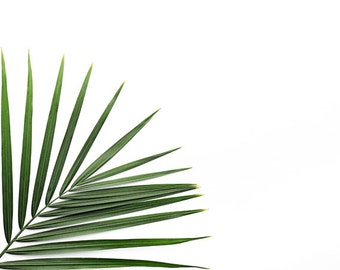 palm leaf print, tropical print, palm tree decor, plant photo, minimalist plant art, palm leaf art, botanical print, green art, palm print