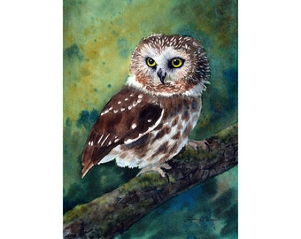 Northern Saw-Whet Owl Watercolor Painting - Fine Art Archival Print - Limited Edition Bird Art by Laura D. Poss