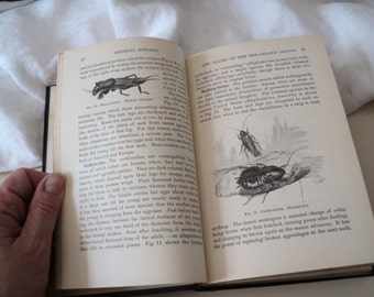 1906 Zoology Textbook. Antique Book.