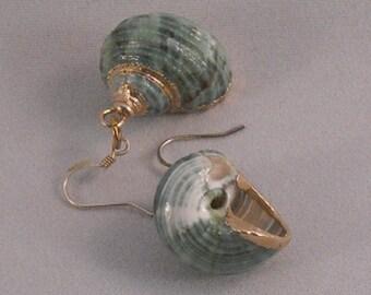 Seashell Earrings Gold Trim Beach Style Aqua