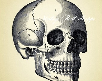 Vintage skull reproduction print 5x7 print Halloween art Home Decor wall print Skull Decor Skull scientific illustration