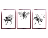 A Silver Liquor Only Now Remains - Extinct Bee Triptych- - Limited edition set of 3 prints