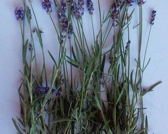 A Bouquet of Fresh Cut Lavender Flowers