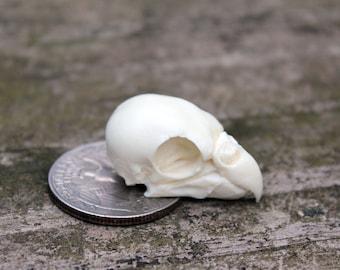 parakeet bird skull replica