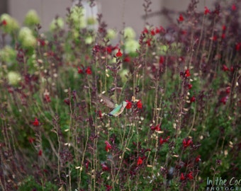 Photo on Recycled Metal, Hummingbird, among the Wild flowers, Blue Green, red flowers, Flying, buzzing, Sweet nector.