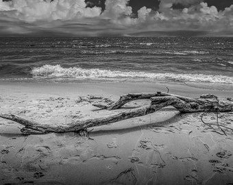 Beach Driftwood in Black and White on Lake Michigan with Waves and Cloudy Sky by Stony Lake Michigan No.BW1122 Nautical Seascape Photograph