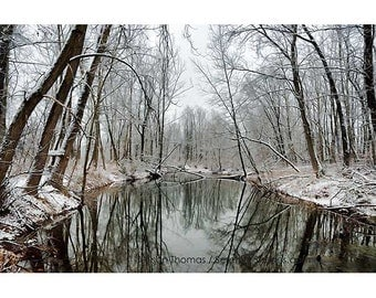 Color Fine Art Print, Snow covered branches, reflection, North River, Virginia, wall art, home decor, digital art, reflection, neutral color