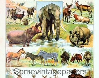 "Animals, Mammals n3 digital file vintage encyclopedia 9x12"" instant download"