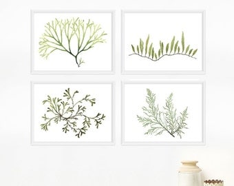 Seaweed Botanical Print Set - Housewarming gift, Watercolor Art Prints / Any FOUR 8x10 OR 8x11 Coastal Wall Art, Beach Decor